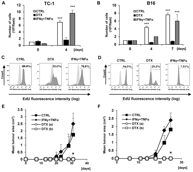 Analysis of TC-1 and B16 cell proliferation during 'primary' induction. (A) TC-1 and (B) B16 cells were treated with DTX and IFNγ + TNFα. Cell proliferation was determined by counting the cell number on days 4 (TC-1 and B16) and 7 (B16 only). Control cells were passaged on day 4. Data are presented as the mean ± standard deviation. *** P