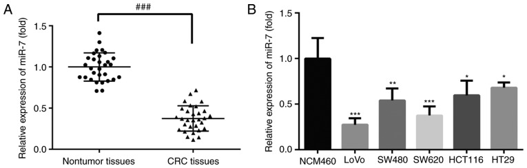 miR-7 was downregulated in CRC tissues and cell lines. The expression of miR-7 in (A) CRC and adjacent normal tissues, and in (B) CRC cells (LoVo, SW480, SW620, HCT116 and HT29) and normal colonic mucosa epithelial NCM460 cells was detected by reverse transcription-quantitative polymerase chain reaction. Data are expressed as the mean ± standard deviation. ### P