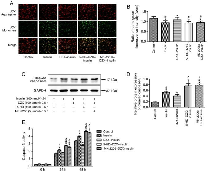 Effects of DZX on regulating the ΔYm, cleaved caspase 3 expression and caspase 3 activities in cultured cardiomyocytes. (A) Detection of ΔYm in the five groups of cardiomyocytes by fluorescent dye <t>JC-1.</t> Scale bar, 200 µ m. (B) Comparison of ΔYm in the five groups of cardiomyocytes. For quantification, 50 cells were randomly selected to calculate the ΔYm levels by comparing red fluorescent intensity to green fluorescent intensity. (C) Western blot images of cleaved caspase 3 expression. (D) Semi-quantitative analysis of cleaved caspase 3 expression (n=5). (E) Detection of caspase 3 activity in the five groups of cardiomyocytes. The caspase 3 activity was calculated by p-nitroaniline concentration relative to total protein concentration (n=3-6). The data are presented as mean ± standard deviation. * P