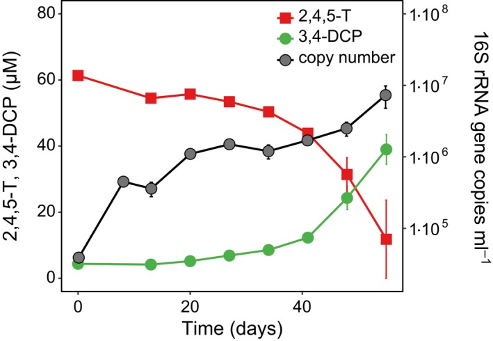 Increase in the copy number of Desulfitobacterium sp. 16S rRNA genes during 2,4,5‐T conversion to 3,4‐ DCP in culture BH 1.1. The concentration of 2,4,5‐ TCP did not exceed 2 μM over the course of the experiment (not shown). After 8 days, pyruvate and citrate were completely converted to acetate (data not shown). Mean values and SD from duplicate cultures and triplicate qPCR analyses are given.