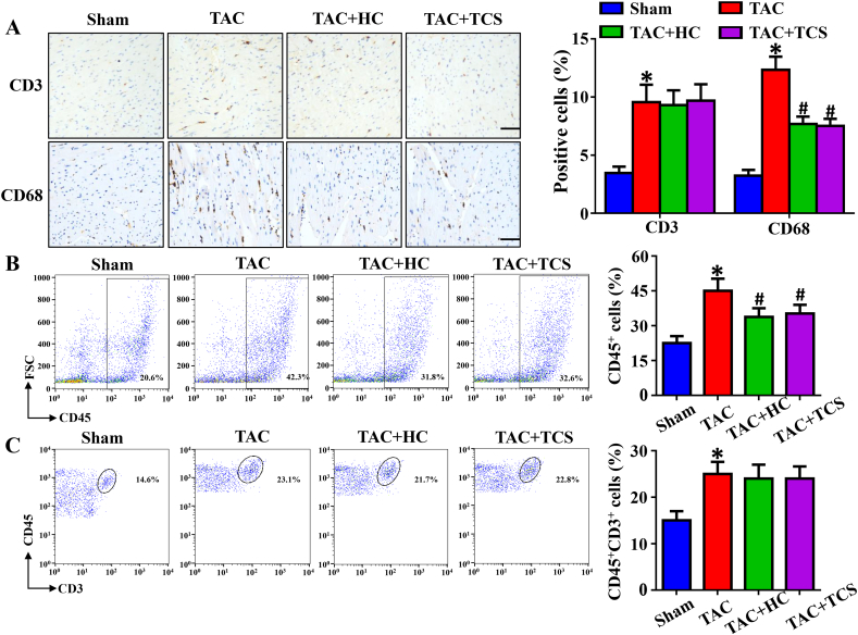 TRPA1 inhibition prevents pressure overload-induced macrophage infiltration in cardiac tissues. (A) Immunohistochemical analysis of CD3 and CD68 in heart sections (n = 7, scale bar, 50 μm). (B–C) Flow cytometry analysis of CD45 + cells and T cells (CD45 + CD3 + ) in mice at 4 weeks after TAC surgery (n = 4). *P