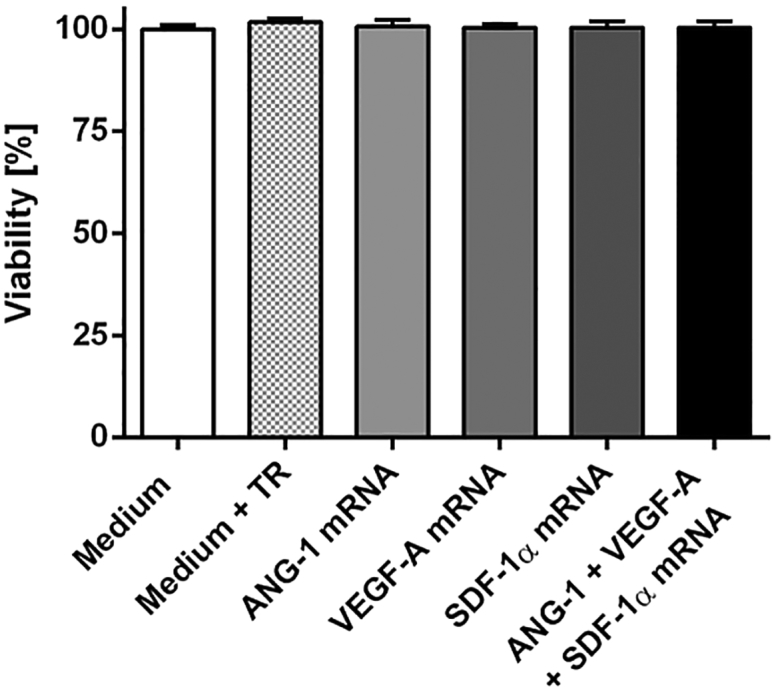 Influence of mRNA Transfection on the Viability of Murine EPCs 1 × 10 5 EPCs were transfected with 1.6 μg ANG-1, 0.8 μg VEGF-A, or 0.5 μg SDF-1α mRNA or with an mRNA cocktail containing 1.6 μg ANG-1, 0.8 μg VEGF-A, and 0.5 μg SDF-1α mRNA. Viability was determined 24 hr post-transfection using PrestoBlue assay. The viability of cells incubated with Opti-MEM (medium) was set to 100%, and the viability of samples was expressed relative to these cells. The data are shown as mean + SEM (n = 3). No statistically significant differences were determined using one-way ANOVA followed by Bonferroni multiple comparison test.