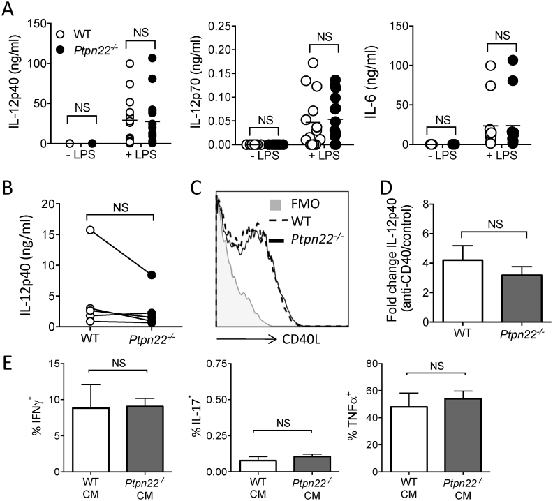 Potentiated Th1 responses induced by Ptpn22 −/− BMDC are not explained by altered production of a secreted factor. (A) Day 6 WT and Ptpn22 −/− BMDC were pulsed for 24 h in the presence or absence of LPS. Cell free supernatants were assessed for IL-12p40, IL-12p70 and IL-6 by cytokine specific immunoassay. N = 11–15 independent experiments per group. NS = not significant determined by unpaired T-test. (B) Day 6 WT and Ptpn22 −/− LPS and OVA 323-339 pulsed BMDC were co-cultured with cell trace violet (CTV) labelled WT CD4 + OT-II T-cells for 24 h and cell free supernatants were assessed for IL-12p40 by immunoassay. N = 6–7 per group with each data point representing an individual WT or Ptpn22 −/− BMDC preparation, points are paired by the OT-II responding T-cells. (C) Day 6 WT and Ptpn22 −/− LPS and OVA 323-339 pulsed BMDC were co-cultured with CTV labelled WT CD4 + OT-II T-cells for 24 h. Cell surface expression of CD40L on CD3 + CD4 + T-cells was determined by flow cytometry. One representative flow plot of 3 independent experiments; T-cells co-cultured with WT BMDC (dashed line) or Ptpn22 −/− BMDC (solid line) (D) LPS pulsed WT and Ptpn22 −/− BMDC were stimulated for 24 h with plate bound anti-CD40 and cell free supernatants were assessed for IL-12p40 by immunoassay. Data are depicted as in IL-12p40 fold change from PBS control to anti-CD40. N = 4 independent experiments; bars represent mean ± s.d. (E) WT OT-II T-cells were cultured for 6 days on anti-CD3 and ant-CD28 in the presence of 50% conditioned media obtained from day 6 WT or Ptpn22 −/− BMDC:WT OT-II co-cultures. At day 6 of culture in the presence of conditioned media T-cells were restimulated for 6 h with PMA, ionomycin and monensin and the proportion of CD3 + CD4 + IFNγ + , IL-17 + , or TNFα + cells determined by intracellular flow cytometry. N = 3 independent experiments; bars represent mean ± s.d. NS = not significant, *p ≤ 0.05, **p ≤ 0.01 determined by unpaired T-test.