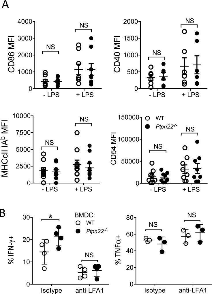 Ptpn22 −/− BMDC promote Th1 responses in an LFA-1 dependent manner. (A) Day 6 WT and Ptpn22 −/− BMDC were pulsed for 24 h in the presence or absence of LPS. Cell surface expression of maturation markers was determined by flow cytometry. Median Fluorescent intensity (MFI) of CD86, CD40, MHCcII IA b , and CD54 (ICAM-1). N = 6–10 independent experiments; bar represents mean ± s.e.m, NS = not significant determined by unpaired T-test. (B) Day 6 WT and Ptpn22 −/− LPS and OVA 323-339 pulsed BMDC were co-cultured with cell trace violet (CTV) labelled WT CD4 + OT-II T-cells for 6 days in the presence or absence of anti-LFA1 or isotype control. At day 6 cells were T-cells were restimulated with a fresh preparation of WT or Ptpn22 −/− BMDC for 48 h and then restimulated for 6 h with PMA, ionomycin and monensin and the proportion of CD3 + CD4 + IFNγ + or TNFα + cells was determined by intracellular flow cytometry. N = 4 independent experiments; bar represents mean ± s.d, NS = not significant, *p ≤ 0.05, determined by unpaired T-test.