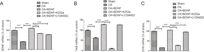 Exogenous BDNF increases BDNF/TrkB/SYN mRNA levels of Alzheimer's disease rats. BDNF (A), TrkB (B), and SYN (C) mRNA expression in the rat hippocampus of each group was examined using <t>quantitative</t> <t>polymerase</t> <t>chain</t> <t>reaction.</t> Data are expressed as the mean ± SD (one-way analysis of variance followed by the Bonferroni confidence interval adjustment test). *** P
