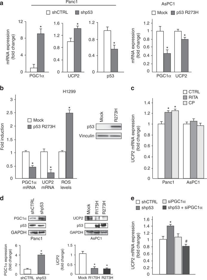 Mutant p53 downregulates UCP2 and PGC-1-α. a Panc1 mutR273H-p53 and AsPC1-p53 null cells were transfected with pRSuper-p53 vector and with plasmids for the ectopic expression of mutant p53-R273H or its relative negative control (CTRL). Gene expression analysis of the p53, UCP2, and PGC-1α was performed by RT-qPCR and was normalized to GAPDH mRNA. * p