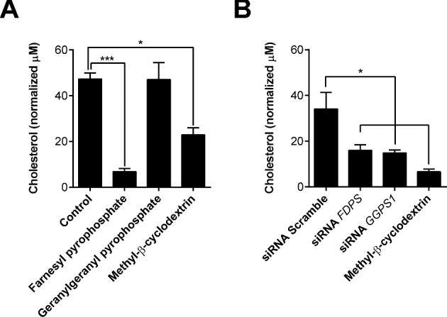 Cellular cholesterol. (A) Endometrial stromal cells were incubated in control serum-free medium, or medium containing 20 μM farnesyl pyrophosphate, 20 μM geranylgeranyl pyrophosphate, or 0.5 mM methyl-β-cyclodextrin for 48 h. (B) Cells were incubated for 48 h in medium containing scramble siRNA or siRNA targeting FDPS or GGPS1 , or cultured with 0.5 mM methyl-β-cyclodextrin as a positive control. Cellular cholesterol was measured and normalized to phospholipid concentrations. Data are presented as mean (SEM); n = 4 independent animals for each experiment. Data were analyzed by one-way ANOVA and Dunnett multiple comparison post hoc test; values differ from control (A) or scramble (B), * P