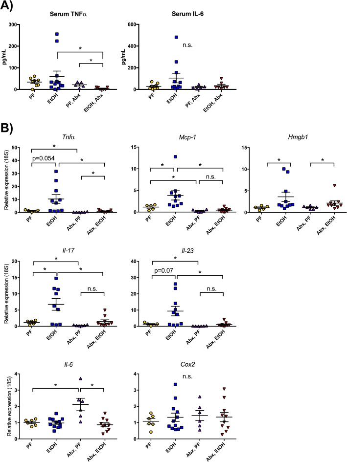 Antibiotic treatment protects from alcohol-induced inflammatory cytokine expression in the cortex. a Serum TNFα and IL-6 were measured by ELISA. b Expression levels of proinflammatory cytokines Tnfα , Mcp1 , Hmgb1 , Il-17 , Il-23 , Il-6 , and Cox2 were measured from the cortex of pair-fed (PF) or alcohol-fed (EtOH) mice with or without daily antibiotic treatment (Abx). Data are mean ± SEM, n = 5–10 mice/group. * p