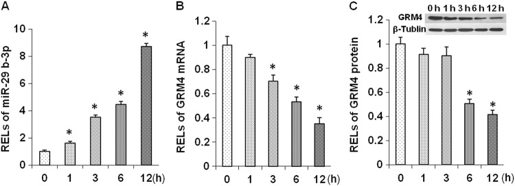 Change in miR-29b-3p and GRM4 levels at different times after ketamine treatment in cultured prefrontal cortex neurons. RELs of miR-29b-3p ( a ) and GRM4 mRNA ( b ) in the prefrontal cortex neurons 1, 3, 6, and 12 h after a 50 µM ketamine treatment. RELs of GRM4 protein in the prefrontal cortex neurons 1, 3, 6, and 12 h after a 50 µM ketamine treatment ( c ). RELs relative expression levels. The data represent three sets of independent experiments and are shown as the means ± SD. * p