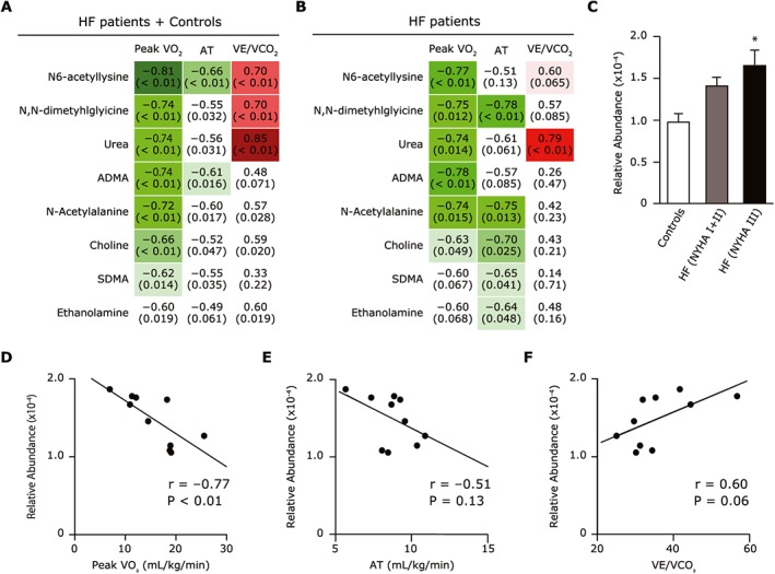 ( A,B ) Plasma metabolites that correlate with peak VO 2 , AT, or VE/VCO 2 in all subjects ( n = 15), i.e. the heart failure patients (HF) ( n = 10) plus the normal controls ( n = 5) ( A ) , and in only the 10 HF patients ( B ) . The upper value indicates the correlation coefficient between peak VO 2 , AT, or VE/VCO 2 and each metabolite. The lower value in parentheses indicates the P ‐value of each correlation. ( C ) Association between plasma <t>acetyl‐lysine</t> levels and NYHA functional class in the controls, the NYHA I or II HF patients, and the NYHA III HF patients. (D–F) Correlation between plasma acetyl‐lysine level and peak VO 2 ( D ) , AT ( E ) , and VE/VCO 2 ( F ) among the HF patients. Data are the mean ± SD. * P
