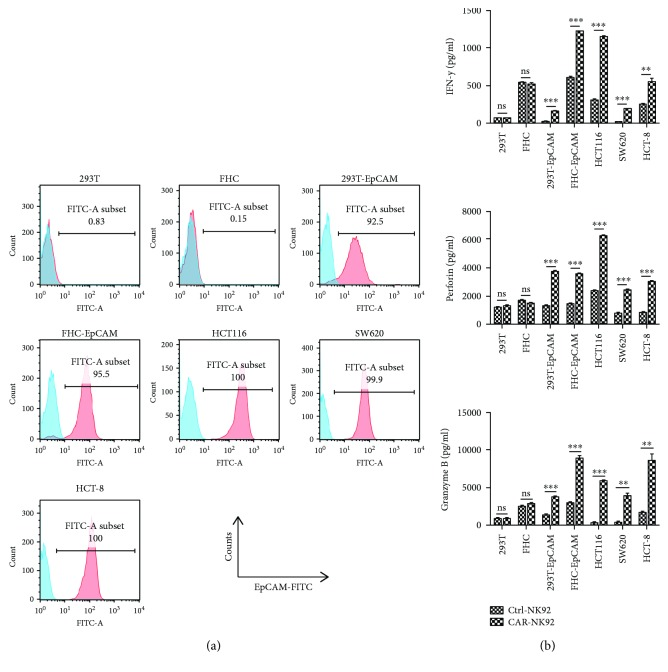 Specific cytokine release of EpCAM-specific CAR-NK-92 cells against EpCAM-positive cells. (a) FACS was used to test the surface expression of EpCAM proteins in 293T, 293T-EpCAM, FHC, and FHC-EpCAM cells and the human colorectal cancer cell lines HCT116, SW620, and HCT-8. (b) The levels of cytokines, released by Ctrl-NK-92 and CAR-NK-92 cells, were measured by enzyme-linked immunosorbent assay (ELISA) after incubation for 24 h with EpCAM-negative or EpCAM-positive target cells at an effector-to-target (E/T) ratio of 2 : 1. ∗∗ p