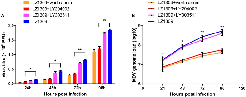 PI3K specific inhibitor LY294002 inhibits MDV replication. CEFs were pre-incubated with LY294002 (20 μM), LY303511 (30 μM) or wortmannin (500 μM) for 1 h, infected with MDV-LZ1309 at 0.1 MOI and analyzed for virus replication at 24, 48, 72, and 96 hpi. (A) MDV plaque quantification. (B) TaqMan real-time PCR detection of viral DNA. The data represent the mean ± SD of three independent experiments. One-way ANOVA, ∗ P