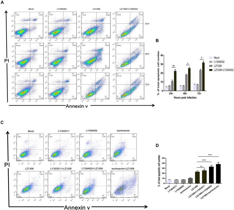 Inhibition of PI3K activity results in the apoptosis of MDV-infected CEF cells. (A) CEFs were pre-treated or not with LY294002 (20 μM), for 1 h, infected with MDV-LZ1309, and analyzed for apoptosis at 24, 48, and 72 hpi by flow cytometry after Annexin V-FITC/PI double staining. (B) Quantification of the numbers of apoptotic cells of (A) . (C) CEFs were pre-treated or not with LY294002 (20 μM), LY303511 (30 μM) or wortmannin (500 μM) for 1 h, infected with MDV-LZ1309, and analyzed for apoptosis at 72 hpi by flow cytometry after Annexin V-FITC/PI double staining; (D) Quantification of the numbers of apoptotic cells of (C) . The data represent the mean ± SD of three independent experiments. Two-way ANOVA, ∗ P
