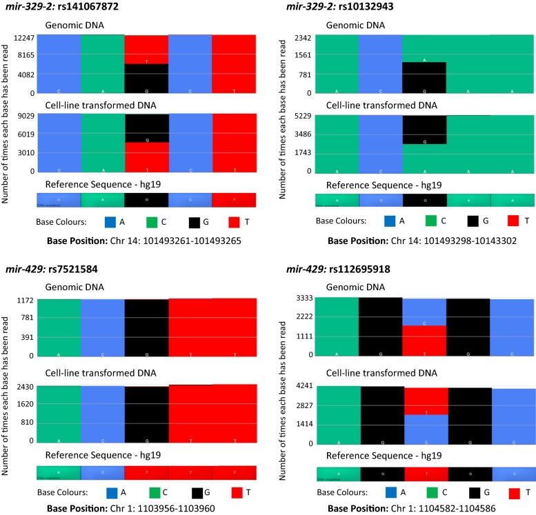 Comparison of matched genomic and cell-line transformed <t>DNA</t> for identified SNPs. Comparison of matched genomic and cell-line transformed DNA for rs141067872, rs10132942 (both miR - 329 - 2 ), rs7521574 and rs112695918 (both miR - 429 ) data generated by the Ion <t>PGM™.</t> The matching gDNA and cell-line transformed DNA show consistent results indicated by the base colour patterns in each example. Chr chromosome, hg human genome