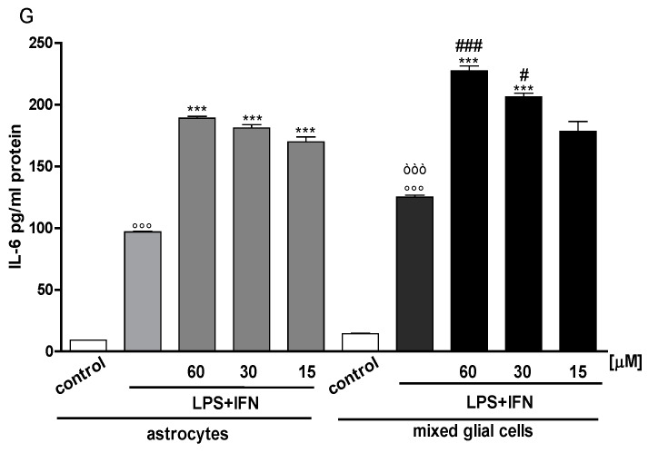 Effect of IS (60, 30 and 15 μM) in inflammatory conditions, induced by LPS (1 µg/mL) + IFN (100 U/mL), on NO relase ( Panel A ), evaluated as NO 2 [µM]. Effect of IS (15–60 μM) in presence of LPS (1 µg/mL) + IFN (100 U/mL) on iNOS ( Panel B ), and COX-2 ( Panel D ) expression in primary astrocytes and mixed glial cells. Cellular fluorescence was evaluated using fluorescence-activated cell sorting analysis (FACSscan; Becton Dickinson), and elaborated with Cell Quest software. Panel C shows the representative fluorescence images for iNOS expression (for primary astrocytes the pink line represent the cellular control, the blue line represent LPS + IFN, the yellow line represent IS 30 µM + LPS + IFN; for mixed glial cells the violet line represent the cellular control, the light blue line represent LPS + IFN, the orange line represent IS 30 µM + LPS + IFN). Panel E shows the representative fluorescence images for COX-2 expression (for primary astrocytes the pink line represent the cellular control, the blue line represent LPS + IFN, the yellow line represent IS 30 µM with LPS + IFN; for mixed glial cells the violet line represent the cellular control, the light blue line represent LPS + IFN, the orange line represent IS 30 µM with LPS + IFN. Effect of IS (15, 30, and 60 μM) in inflammatory conditions, induced by LPS (1 µg/mL) and IFN (100 U/mL) on TNF-α ( Panel F ) and on IL-6 ( Panel G ) release by astrocytes and mixed glial cells. Cyokine release was assessed by ELISA assay. Values are expressed as NO 2 - release, or mean fluorescence intensity or as pg/mL protein for cytokines. Comparisons were performed using a one-way analysis of variance and multiple comparisons were made by Bonferroni's post test. °°° denotes p
