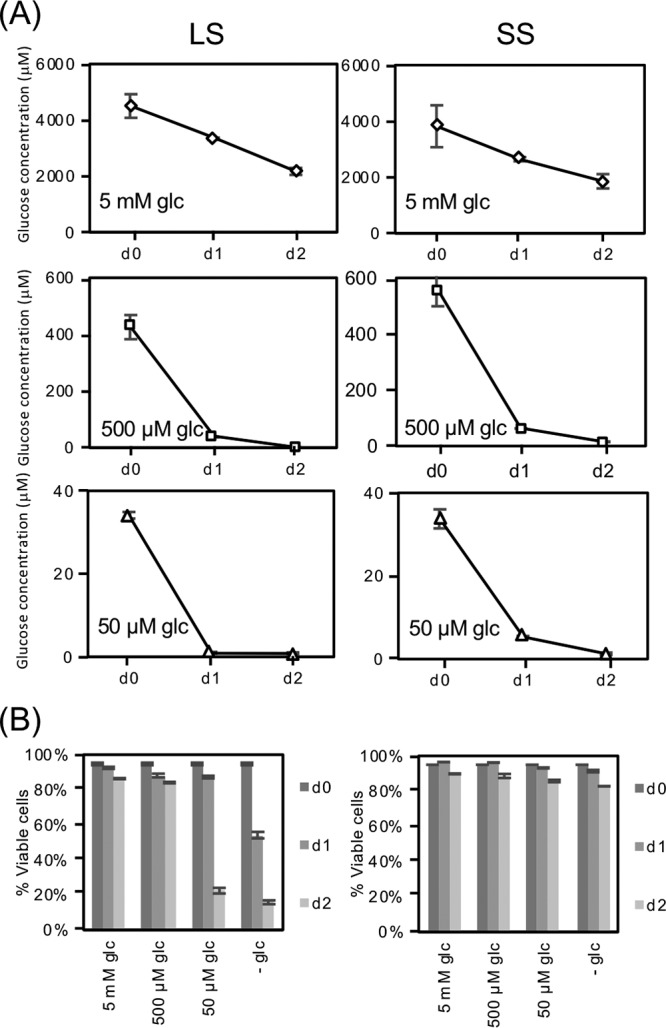 Slender form (LS) and short stumpy form (SS) T. brucei rapidly deplete glucose. Parasites isolated from rodent buffy coats by chromatography were washed extensively in PBS and then resuspended (4 × 10 5 cells/ml for LS and 5 × 10 5 cells/ml for SS) in RPMIθ supplemented with proline and threonine and different concentrations of glucose. LS parasites (left column) were isolated after 4 days of infection and made up nearly 100% of the parasite population as determined by microscopy, while the SS samples (right column) contained a mixture of SS (∼90%) and LS (∼10%) parasites as scored by cytometry of PAD1-labeled parasites (not shown). (A) Glucose concentrations in the medium were measured through time as described in Materials and Methods and standard deviations from experiments performed in triplicate are indicated. (B) Parasite viability was scored by propidium iodide staining.