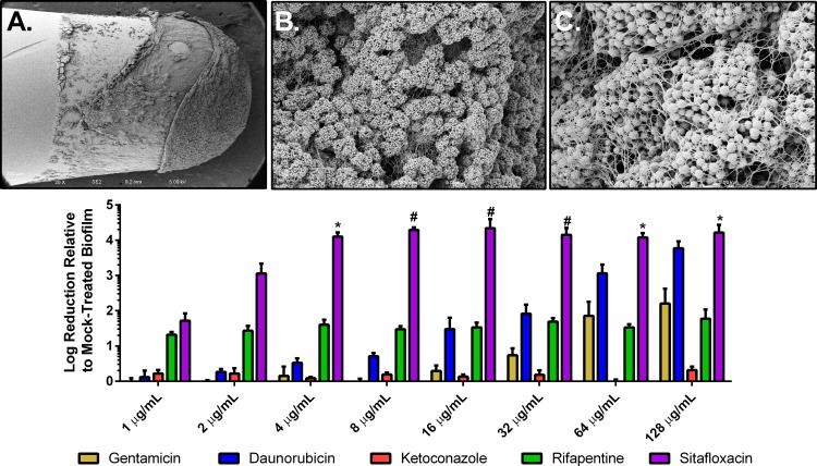 Dose response of gentamicin, daunorubicin, ketoconazole, rifapentine, and sitafloxacin against established S. aureus biofilm using the MBEC assay. UAMS-1 biofilm was established on polystyrene pegs after 24 h of incubation with media supplemented with 10% (vol/vol) human plasma, and representative SEM is shown with magnifications of ×100 (A), ×1,000 (B), and ×5,000 (C). Biofilm was challenged by 1 to 128 µg/ml of each of the 4 validated HTS drugs and gentamicin (D). Sitafloxacin significantly killed biofilm at concentrations 4 to 128 µg/ml in comparison to gentamicin at each concentration. * indicates P