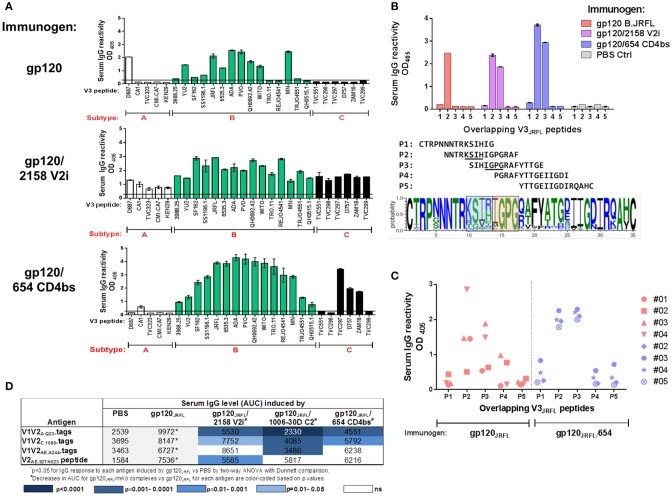V3-specific Ab responses induced by gp120 JRFL /mAb complexes vs. uncomplexed gp120 JRFL . (A) Sera from mice immunized with gp120 B.JRFL in complex with V2i mAb 2158, CD4bs mAb 654, or no mAb were tested in ELISA for IgG reactivity against V3 peptides of HIV-1 subtypes A, B, and C. (B) Overlapping V3 peptides P1 to P5 were used for epitope mapping. Sequence logo depicting V3 amino acid variations is included to show the central V3 regions that are targeted by Abs induced by gp120 JRFL (blue-shaded box) vs. gp120 JRFL /mAb complexes (orange-shaded box). (C) Sera from individual animals were tested for reactivity with overlapping V3 peptides P1 to P5 and demonstrated more uniform recognition of P2 and P3 peptides by all animals that received gp120 JRFL /CD4bs mAb 654 vs. uncomplexed gp120 JRFL. . ( D ) Sera from mice immunized with gp120 JRFL or gp120 JRFL /mAb complexes were also tested for IgG reactivity with different V1V2 antigens. AUC: area under the titration curve. PBS: Sera from control group that received PBS and adjuvant (no gp120).