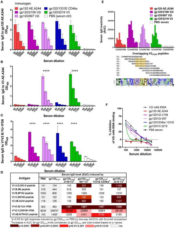 Serum Ab responses induced by gp120 A244 /mAb complex vaccines. Mice were immunized with gp120 AE.A244 in complex with human IgG1 mAbs specific for V2i (2158), V2i (697), CD4bs (1331E), V3 (2219), or with no mAb in the presence of adjuvant MPL/DDA. (A–C) Sera collected 2 weeks after the fourth immunization were tested in ELISA for IgG reactivity to gp120 (A) , V3 (B) , and V1V2 (C) . (D) Sera were also evaluated for cross-reactivity with V3 and V1V2 from viruses of different HIV-1 subtypes. (E) Further mapping of V2 epitope was performed using overlapping V2 peptides P1 to P9. V2 sequence logo is shown to indicate amino-acid variability within the defined epitope region (orange-shaded box). (F) Sera were subjected to competition ELISA using V1V2 C.ZM109-1FD6 to assess the presence of V1V2-specific serum Abs able to compete with conformation-dependent V2i mAb 830A. **** p