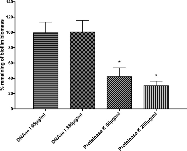 Effect of enzymatic treatments on preformed biofilms. H. pylori SS1 was allowed to form biofilms for 3 days in BB2. The medium was then removed and replaced with either fresh medium or medium containing DNase I or proteinase K. Cells were reincubated for 24 h and then analyzed for the remaining biofilm using the crystal violet assay. The data shown here represent the percentage of remaining biofilm compared to the untreated control. Experiments were performed three times independently with at least 8 technical replicates for each. Statistical analysis was performed using ANOVA (*, P