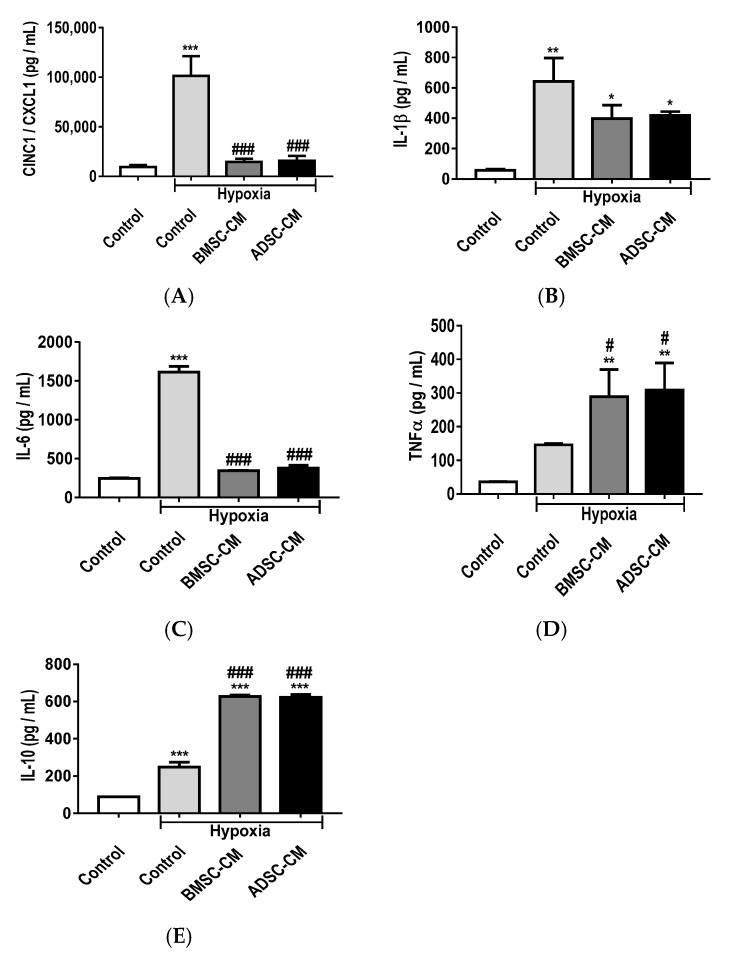 The release of pro-inflammatory; ( A ) CINC-1/CXCL-1, ( B ) IL-1β, ( C ) IL-6, ( D ) TNF-α and anti-inflammatory cytokines; ( E ) IL-10 from primary rat AECs pre-treated with human BMSC/ADSC-CM during hypoxic (1.5% O 2 ) exposure for 24 h. ELISAs were used to measure secreted inflammatory cytokines in the supernatant of primary AECs. Data presented as mean ± SD; n = 3 (* p