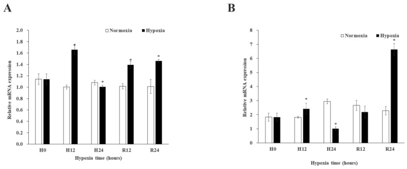 Expression of MnGST-1 ( A ) and MnGST-2 ( B ) in the muscle of M. nipponense at five time points after hypoxia and reoxygenation (H0: hypoxia for 0 h; H12: hypoxia for 12 h; H24: hypoxia for 24 h; R12: reoxygenation for 12 h; R24: reoxygenation for 24 h). Data indicated with asterisks are significantly different ( p