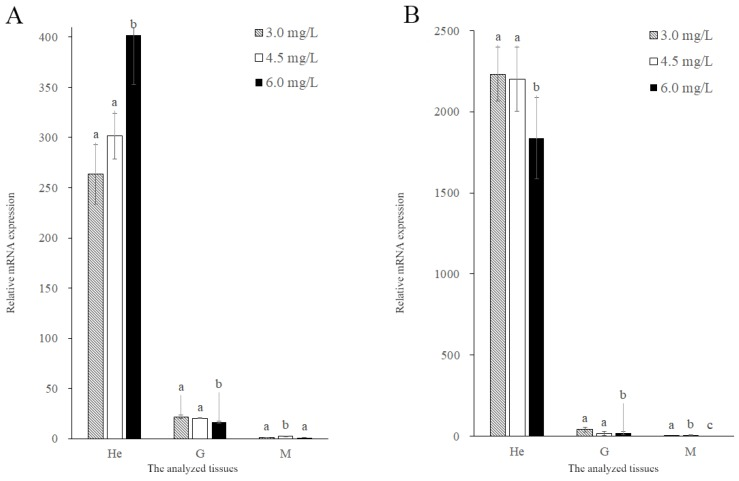 Expression of MnGST-1 ( A ) and MnGST-2 ( B ) in the hepatopancreas (He), gill (G) and muscle (M) of M. nipponense in response to chronic hypoxia stress experiment. Values are means ± SE for triplicate samples. Bars with different letters indicate significant differences ( p