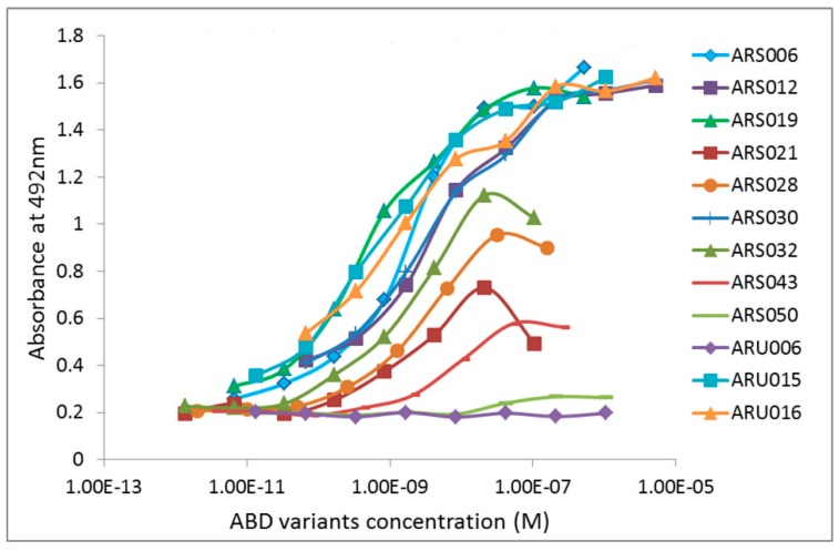 Screening of the interleukin 17 cognate receptor A (IL-17RA)-binding variants in enzyme-linked immunosorbent assay (ELISA). Bacterial cell lysates of individual ARS and ARU clones were screened for binding to the immobilized recombinant IL-17RA receptor. The binding proteins were produced in the form of in vivo biotinylated ARS/ARU-TolA-AVI fusion proteins and their binding to IL-17RA was visualized by streptavidin-HRP conjugate.