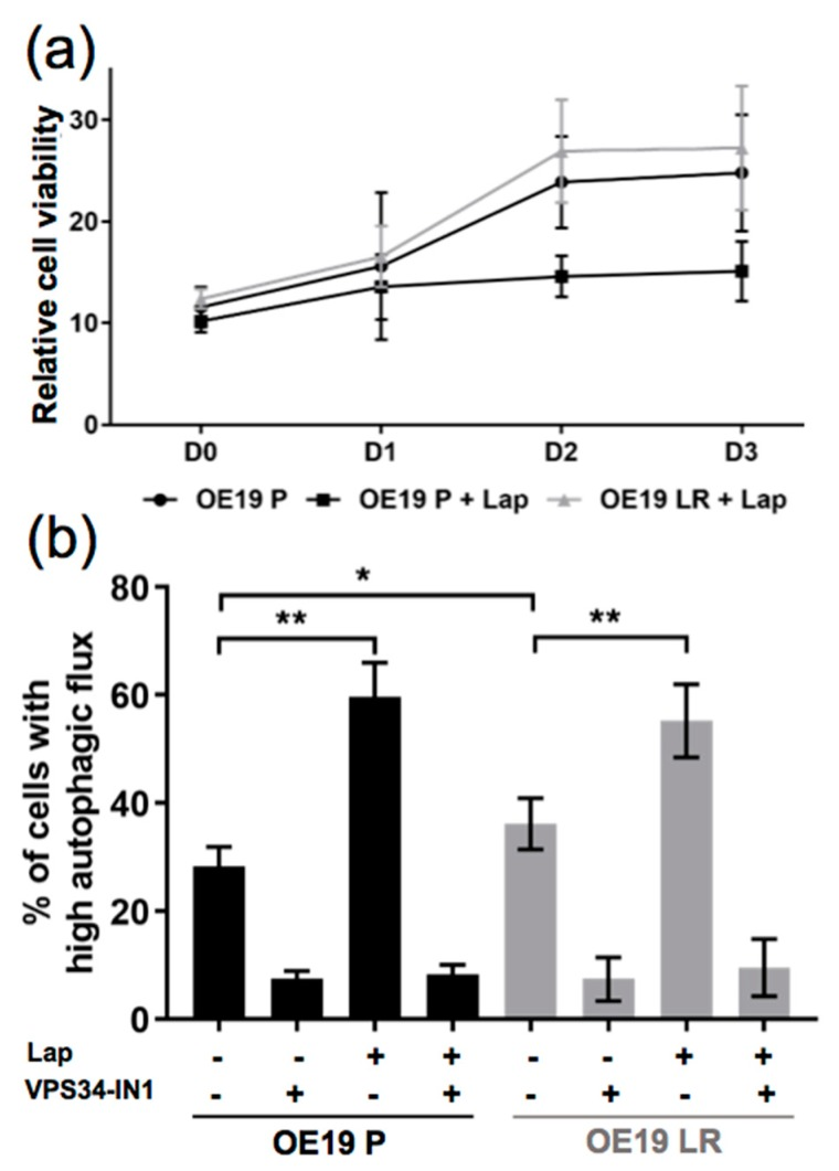 Comparison of the autophagic flux induction in parental (OE19 P) and Lapatinib-resistant (OE19 LR) OE19 cells. ( a ) Relative cell viability assessed by alamarBlue ® assay of OE19 P and OE19 LR cells, treated with dimethyl sulfoxide (DMSO) alone or 120nM of Lapatinib ( n = 3). ( b ) Quantification of FACS analysis comparing OE19 P and OE19 LR transduced with a mCherry-EGFP-LC3B construct (same treatment as in a). As a control, autophagy blocked conditions (addition of 5µM VPS34-IN1) were included, ( n = 4). The error bars represent SD, statistical significance was determined by Mann–Whitney U test: * p ≤ 0.05, ** p ≤ 0.01.