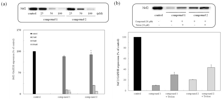 Expression of the nuclear factor-erythroid-2-related factor (Nrf2) protein due to peroxy sesquiterpenoids in HCT116 colon cancer cells. ( a ) Western blot analysis of the Nrf2 protein in the presence of compounds 1 and 2 (above) and densitometry analysis of the expression of the Nrf2 protein (below). Data were expressed as means ± SD. A Student's t -test was applied to analyze the significance of the difference. * p