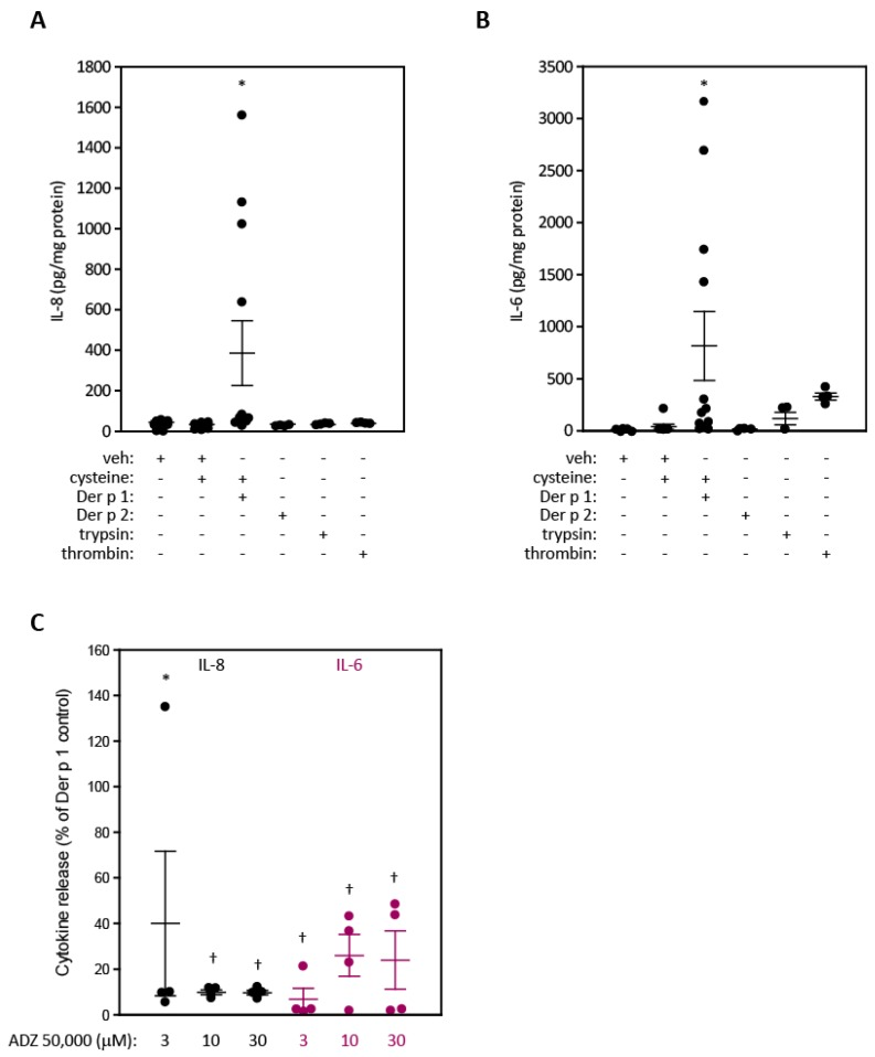 Release of IL-8 or IL-6 from cultured A549 cells and the effect of ADZ 50,000. ( A , B ) Release of IL-8 or IL-6 following stimulation by Der p 1 (20 nM), Der p 2 (14 nM), TPCK-treated trypsin (9 nM), or thrombin (0.5 U/mL) all applied apically. Cells were exposed for 8 h to serum-free EMEM containing the treatments, supplemented with 5 mM cysteine in the case of Der p 1. Cells were then washed and incubated with serum-free EMEM alone for a further 16 h prior to collection of samples. Data are shown as results from individual experiments with cells of different passage number. * p