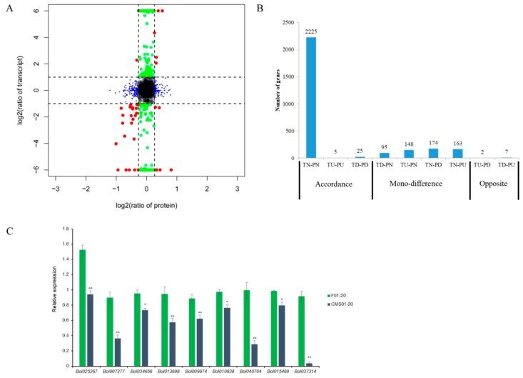 Integrative analyses comparing proteome and transcriptome data. ( A ) Genes were divided into nine groups according to log 2 ratios of the protein species ( y -axis) and transcripts ( x -axis); ( B ) Number of genes among the nine groups in ( A ). T: transcript; P: protein species; N, no difference; U: up-accumulation; D, down-accumulation. ( C ) Expression validation for nine key genes by qRT-PCR. * p