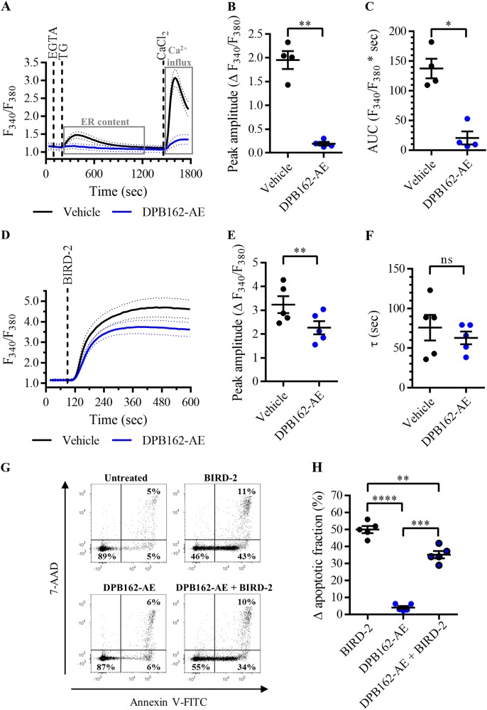 DPB162-AE reduces the cytotoxic effects of BIRD-2 in SU-DHL-4 cells. a Analysis of Ca 2+ influx after store depletion in SU-DHL-4 cells using the ratiometric Ca 2+ indicator Fura-2 AM. Cells were pre-treated for 30 min with vehicle (black line) or with 10 µM DPB162-AE (blue line). To deplete the ER Ca 2+ store, 3 mM EGTA and 1 µM thapsigargin (TG) were added as indicated. After store depletion, Ca 2+ influx was triggered by adding 10 mM CaCl 2 . The curves represent the mean ± SEM of four independent experiments. Quantification of the Ca 2+ influx is provided as the peak amplitude (∆ F 340 / F 380 ) in b , whereas the TG-releasable Ca 2+ is quantified as the AUC ( F 340 / F 380 × s) in c . d Analysis of the cytosolic Ca 2+ response in SU-DHL-4 cells using Fura-2 AM. Cells were pre-treated for 30 min with vehicle (black line) or 10 µM DPB162-AE (blue line). Addition of 10 µM BIRD-2 is indicated by the dotted line. The curves represent the mean ± SEM of five independent experiments. The BIRD-2-provoked cytosolic Ca 2+ rise is quantified by measuring the peak amplitude (∆ F 340 / F 380 ), shown in e , and the time constant τ (s), which is shown in f . g Representative scatter plots from flow cytometry analysis detecting apoptosis in SU-DHL-4 cells stained with Annexin V-FITC and 7-AAD. Cells were pre-treated with or without 10 µM DPB162-AE 30 min prior to application of 10 µM BIRD-2. After 2 h of BIRD-2 treatment, apoptotic cell death was detected by measuring the Annexin V-FITC-positive fraction. h Quantitative analysis of five independent experiments detecting apoptosis in SU-DHL-4 cells treated for 2 h with 10 µM BIRD-2, with or without pre-treatment with 10 µM DPB162-AE. The ∆ apoptotic fraction is plotted, which corresponds to the apoptotic fraction corrected for the percentage of apoptosis detected in untreated cells. In the dot plots, data are represented as the mean ± SEM of at least four independent experiments. Statistically significant differences were deter