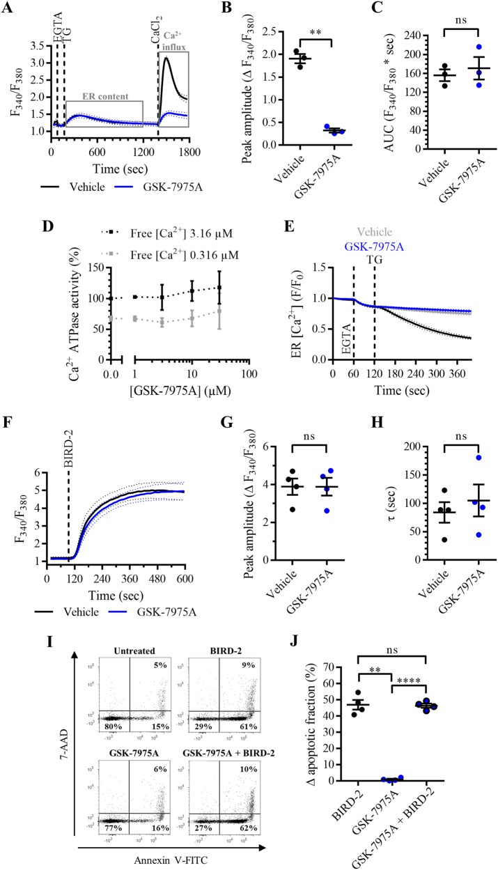 SOCE inhibition with GSK-7975A does not reduce apoptosis induced by BIRD-2 in SU-DHL-4 cells. a Analysis of Ca 2+ influx after store depletion in SU-DHL-4 cells using the ratiometric Ca 2+ indicator Fura-2 AM. Cells were pre-treated for 30 min with vehicle (black line) or with 3 µM GSK-7975A (blue line). To deplete the ER Ca 2+ store, 3 mM EGTA and 1 µM TG were added as indicated. After store depletion, Ca 2+ influx was triggered by adding 10 mM CaCl 2 . The curves represent the mean ± SEM of three independent experiments. Quantification of the Ca 2+ influx is provided as the peak amplitude (∆ F 340 / F 380 ) in b , whereas the TG-releasable Ca 2+ is quantified as the AUC ( F 340 / F 380 × s) in c . d Dose–response curve of GSK-7975A on SERCA2b ATPase activity (%). The Ca 2+ -dependent ATPase activity was measured at maximal (free [Ca 2+ ] 3.16 µM) and submaximal (free [Ca 2+ ] 0.316 µM) [Ca 2+ ] for different treatments, including vehicle (control) and different [GSK-7975A]. Data were normalized to the values obtained in the control condition at maximal [Ca 2+ ], which was set at 100%. Data are represented at the mean ± SEM of three independent experiments. e Single-cell analysis of the ER Ca 2+ levels in HeLa cells transfected with G-CEPIA1 er plasmid. Cells were treated with vehicle (gray curve), 1 µM TG (black curve), or 3 µM GSK-7975A (blue curve) 60 s after the addition of 3 mM EGTA. Data are represented as the mean ± SEM of three independent experiments ( n > 100 cells/condition). f Analysis of the cytosolic Ca 2+ response in SU-DHL-4 cells using Fura-2 AM. Cells were pre-treated for 30 min with vehicle (black line) or 3 µM GSK-7975A (blue line). Addition of 10 µM BIRD-2 is indicated by the dotted line. The curves represent the mean ± SEM of four independent experiments. The BIRD-2-provoked cytosolic Ca 2+ rise is quantified by measuring the peak amplitude (∆ F 340 / F 380 ), shown in g , and the time constant τ (s), which is shown in h . i Representative sca