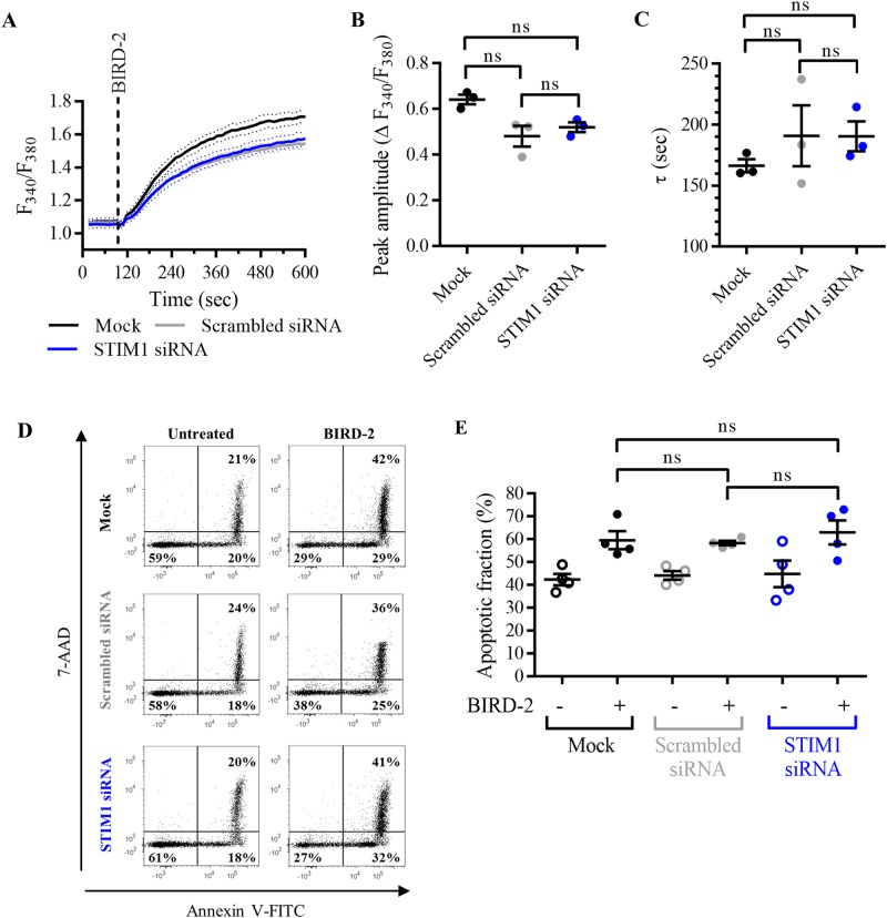 Knockdown of STIM1 with siRNA does not reduce apoptosis triggered by BIRD-2 in SU-DHL-4 cells. a Analysis of the cytosolic Ca 2+ response in mock-transfected SU-DHL-4 cells, or cells transfected with scrambled siRNA or with siRNA against STIM1, using Fura-2 AM. Addition of 10 µM BIRD-2 is indicated by the dotted line. The curves represent the mean ± SEM of three independent experiments. The BIRD-2-provoked cytosolic Ca 2+ rise is quantified by measuring the peak amplitude (∆ F 340 / F 380 ), shown in b , and the time constant τ (s), which is shown in c . d Representative scatter plots from flow cytometry analysis detecting apoptosis in transfected SU-DHL-4 cells stained with Annexin V-FITC and <t>7-AAD.</t> Cells were treated for 2 h with 10 µM BIRD-2, after which apoptotic cell death was detected by measuring the Annexin V-FITC-positive fraction. e Quantitative analysis of four independent experiments detecting apoptosis in mock-transfected SU-DHL-4 cells or cells transfected with scrambled siRNA or with STIM1 siRNA. Cells were treated for 2 h with 10 µM BIRD-2. In the scatter plots, data are represented as the mean ± SEM of at least three independent experiments. Statistically significant differences were determined with a one-way ANOVA. NS not significant.