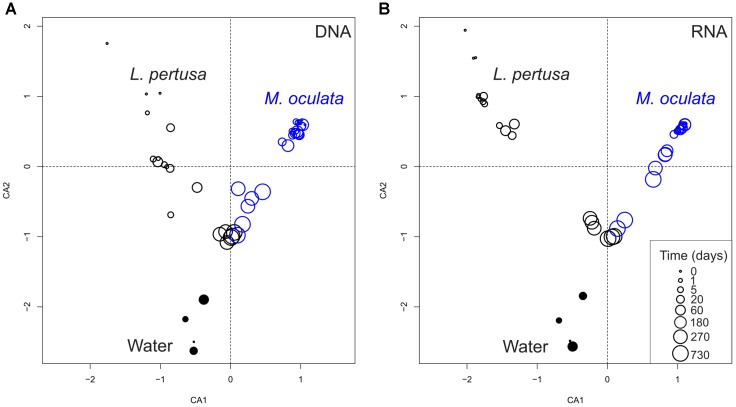 Correspondence analysis of bacterial communities based on 16S rDNA (DNA) (A) and 16S rRNA (RNA) (B) . L. pertusa communities are marked as black open circles, M. oculata as blue open circles, and water as filled circles. The size of the circles corresponds to the time in captivity.