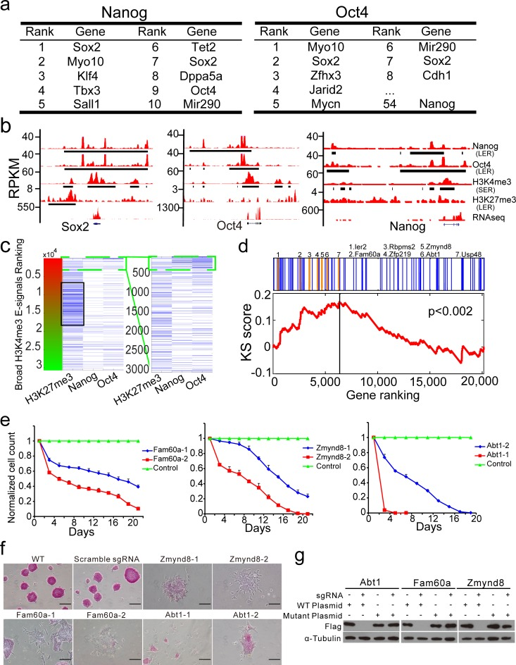 CLUES captures bivalent chromatin status, core regulation genes circuitry and novel self-renewal and pluripotency regulators of mouse ES cells by integrating prioritized broad E-signals of H3K4me3, H3K27me3, Nanog and Oct4. a. Genes associated with top-ranked broad E-signals of Nanog and Oct4. b. The plots of broad E-signals of H3K4me3, H3K27me3, Nanog and Oct4 and RNA-Seq signals at Sox2, Oct4 and Nanog locus. Y-axes, RPKM of Nanog, Oct4, H3K4me3, and H3K27me3 ChIP-Seq datasets and RNA-Seq datasets. c. A heat-map of broad H3K4me3 E-signals associated with broad H3K27me3 E-signals, top-ranked Nanog (top 5%) and top-ranked Oct4 (top 5%) broad E-signals. The heat-map is rank-ordered by broad H3K4me3 E-signals. d. The top 100 genes revealed by the CLUES integrated analysis are significantly enriched at the top of the list from a CRISPR/Cas9 negative selection genetic screen (Kolmogorov–Smirnov test, p
