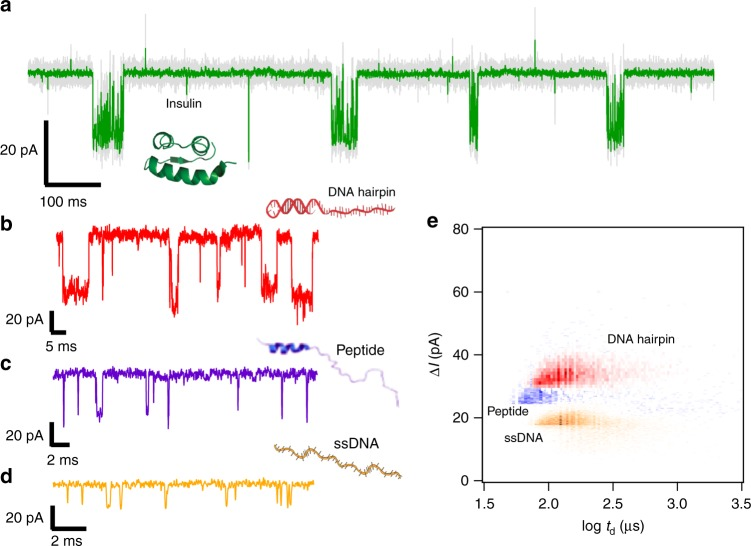Sensing different biopolymers using a hybrid nanopore. Current vs time trace recorded through the hybrid pore at +60 mV in the presence of a 36.0 μM insulin, b 7.7 μM DNA hairpin, c 10.3 μM TPX2 peptide and d 16.6 μM ssDNA. The data in a were filtered at 10 kHz (gray) or 0.5 kHz (green). e Scatter plot of Δ I vs dwell time for the DNA hairpin (red, n = 5883 events), the peptide (purple, n = 3368 events) and the ssDNA (orange, n = 18,812 events)). Experiments were performed in 0.5 M NaCl, 20 mM Tris, pH 7.5