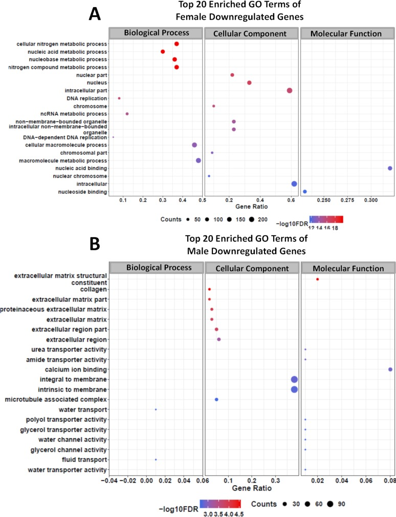 Gene Ontology terms enrichment analysis of downregulated genes detected by RNA-seq in adult S . mansoni female and male worms treated with GSK343. Top 20 enriched GO terms for differentially expressed downregulated genes in female (A) and in male (B) adult worms. The three major GO term categories, namely Biological Process, Cellular Component and Molecular Function are separately represented in each panel. The size of the circles is proportional to the number of genes in each significantly enriched category, as indicated at the lower part scales; the colors show the statistical significance of the enrichment, as indicated by the -log10 FDR values that appear in the color-coded scales at the bottom. A GO enrichment significance cutoff of FDR ≤ 0.05 was used.