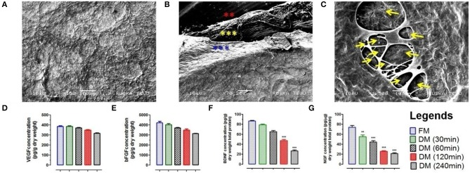 (A) Ultra-structure analysis using SEM analysis of DMS (DM/240) showed intact architecture of tissue specific ECM and 3D-organization to provide suitable microenvironment for neuronal cells survival and expansion. (B) SEM analysis revealed fibrous micro-structures of meningeal tissue in native form. The 3D network of connective tissue fibers were arranged in specific manner in native form through the network of ECM proteins. All the three different layers of meninges are depicted by star marks in different colors. (C) Cross section of DMS (DM/240) showing presence of vascular network within the scaffold (depicted by yellow color arrows). Quantification of retained cytokines (D) VEGF and (E) bFGF in DMS showed significant higher amount of retention even after 240 min of decellularization which was almost similar to the native meningeal tissue (FM) ( p > 0.05). However, significant decrease was observed for (F) BDNF and (G) NGF with increasing time of complete decellularization ( ** p