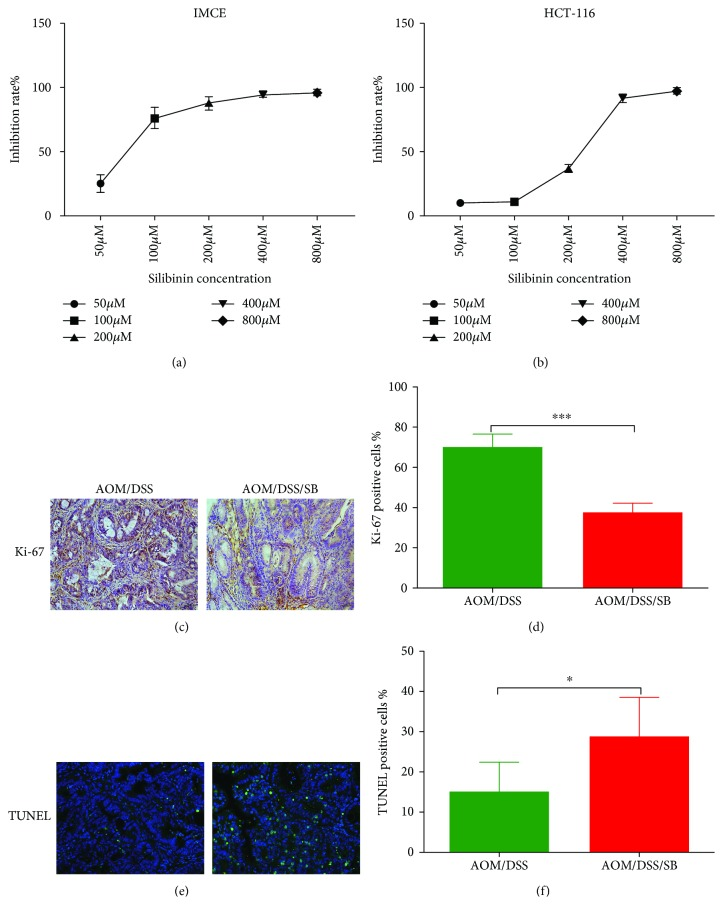 Silibinin supplementation inhibited proliferation and promoted apoptosis in intestinal tumor cells. (a, b) IMCE and HCT-116 cells were treated with silibinin at indicated concentrations for 72 h, respectively. Cell viability was then determined by MTT assay. Data are representative of three independent experiments and expressed as mean ± SD. (c, d) Colon sections from the AOM/DSS and AOM/DSS/SB groups were stained with Ki-67 (brown staining). (e, f) Colon sections from the two groups were stained with TUNEL. Green staining represented apoptotic cells. Scale bars, 50 μ m. Positive rate was determined by counting positively stained nuclei in tumor cells at 5 randomly selected fields from each group. SB: silibinin. n = 5~11 ( ∗ P