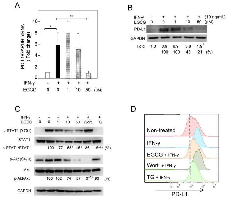 "Downregulation of IFN-γ–induced PD-L1 protein and inhibition of STAT1- and Akt-phosphorylation in A549 cells treated with (−)-epigallocatechin gallate (EGCG). ( A ) PD-L1 mRNA expression, ( B ) PD-L1 protein, ( C ) phosphorylation of STAT1 and Akt, and ( D ) cell-surface PD-L1. ""−"" and ""+"" indicate in the absence or presence of IFN-γ (10 ng/mL). Numbers indicate average percentage compared with IFN-γ–treated cells. * p"
