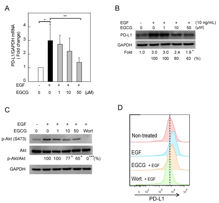 "Downregulation of EGF-induced PD-L1 protein and inhibition of Akt phosphorylation in Lu99 cells treated with EGCG. ( A ) PD-L1 mRNA expression, ( B ) PD-L1 protein, ( C ) phosphorylation of STAT1 and Akt, and ( D ) cell-surface PD-L1. ""−"" and ""+"" indicate in the absence or presence of EGF (10 ng/mL). Numbers indicate average percentage compared with EGF-treated cells. * p"