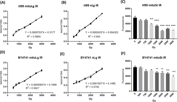Quantitative detection of DNA damage in C . neoformans H99 and S . cerevisiae BY4741 exposed to ionizing radiation using the long mitochondrial DNA and nuclear DNA fragments. H99 and BY4741 cells were exposed to ionizing radiation from doses of 500 Gy to 3000 Gy. Irradiated cells were immediately frozen at -80 ° C and DNA extraction was performed as described in the Material and Methods. PCR products were quantified using the PicoGreen assay. DNA lesions were calculated according to the formula (lesions/amplified fragment = -ln (A D /A C )). The solid lines are lines connecting each data point. The dotted lines are the linear regression lines. (A and D) long mitochondrial DNA fragment lesions, (B and E) long nuclear DNA fragment lesions, (C and F) short mitochondrial DNA fragment PCR yield. Results were from three independent experiments with triplicate samples in each experiment (3 samples/point/experiment x 3). Mean ± S.E.M. **, p