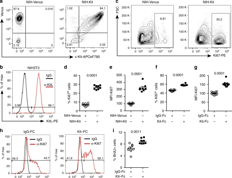 Membrane-bound Kit ligand acts as a c-Kit receptor to induce cell proliferation. a Flow cytometry plots of pRRL-Venus-transduced (left plot; NIH-Venus) and pRRL–c-Kit-Venus-transduced NIH3T3 cells (right plot; NIH-Kit) stained with anti–c-Kit antibody. Data are representative of three experiments. b Flow cytometry plot of NIH3T3 cells stained with anti-SCF antibody or control IgG, as indicated. Data are representative of three experiments. c Ki67 expression in NIH3T3 co-cultured together with NIH-Venus (left plot) or NIH-Kit (right plot) detected by intracellular flow cytometry. Gating shows Ki67 high cells. d Percentage of Ki67 high cells in cultures from c ( N = 7, two experiments). Bars show mean ± s.e.m. P -value is shown (Student's t -test). e Mean fluorescence intensity (MFI) of Ki67 signal in samples from d . Bars show mean ± s.e.m., with NIH-Venus mean = 100. P -value is shown (Student's t -test). f Percentage of Ki67 + cells in cultures from NIH3T3 treated with 200 ng/ml Kit-Fc ( N = 10; two experiments) or IgG-Fc ( N = 10, two experiments), as indicated, for 24 h prior to analysis by intracellular flow cytometry. Bars show mean ± s.e.m., with NIH-Venus mean = 100. P - value is shown (Student's t -test). g Mean fluorescence intensity (MFI) of Ki67 signal in NIH3T3 cells from f . Bars show mean ± s.e.m., with NIH-Venus mean = 100. P -value is shown (Student's t -test). h Representative flow cytometric analysis of Ki67 expression in IgG-Fc (left panel) and Kit-Fc (right panel) treated NIH3T3 cells from f . i Percentage of NIH3T3 cells incorporating BrdU after 8 h treatment with 200 ng/ml IgG-Fc or Kit-Fc ( N = 8; two experiments) as indicated. BrdU was added to the culture medium 2 h before analysis. Bars show mean ± s.e.m. P -value is shown (Student's t -test)