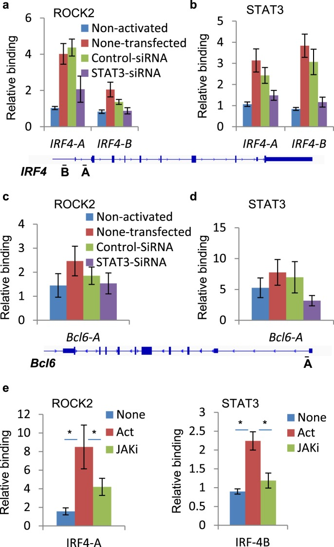 Knockdown of STAT3 decreases binding of ROCK2 to Irf4 promoter. Human peripheral blood CD4 + T cells were transfected with control or STAT3 siRNA, before stimulated under Th17-skewing conditions for 48 hours ( a–d ) or treated with a JAK inhibitor, Baricitinib while being stimulated under Th17-skewing conditions for 48 hours ( e ). Chromatin was purified and proceeds to ChIP-qPCR analysis with anti-ROCK2 ( a , c , e ) or anti-STAT3 antibodies ( b , d , e ). The average of three or four different experiments is shown. *p