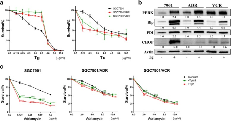 Thapsigargin could not mimic the effects of tunicamycin on MDR GC cells. a Concentration-survival curves of GC cells treated with Tg or Tu (wide dose range) for 48 h. Tg, thapsigargin. b Expressions of UPR-related proteins in GC cells after Tg treatment (2 μg/ml) for 48 h determined by WB. All proteins were normalized to β-actin. c The effects of Tg on the chemosensitivity of GC cells after treatment for 48 h. ns, non-significant; * P
