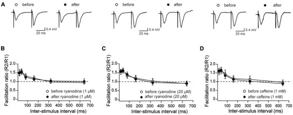 Effects of stimulatory and inhibitory ryanodine concentrations and of caffeine on paired-pulse (PP) responses measured in CA3–CA1 hippocampal synapses. (A) Representative fEPSP traces showing PP responses before and after addition of 1 μM ryanodine (left panels), 20 μM ryanodine (center panels) and 1 mM caffeine (right panels). (B) Effects of 1 μM ryanodine applied for 15 min on PP facilitation. The graph illustrates the facilitation ratio vs. inter-stimulus intervals. (D) Effects of 1 mM caffeine applied for 15 min on PP facilitation. The graph illustrates the facilitation ratio vs. inter-stimulus intervals. (C) Effects of 20 μM ryanodine applied for 60 min on PP facilitation. The graph illustrates the facilitation ratio vs. inter-stimulus intervals. Values represent Mean ± SE; (13, 4) for ryanodine-treated slices; (12, 3) for caffeine-treated slices and (16, 4) for the control. The first number in parentheses indicates the number of hippocampal slices and the second the number of animals used.