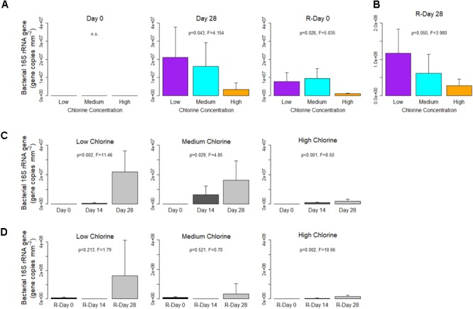 Bacterial gene concentrations within drinking water biofilms developed under different chlorine concentrations. (A,B) show the impact of chlorine concentration, note the different y -axis scale in (B) . For each regime, temporal changes are shown with respect to (C) Growth and (D) Re-growth phases. Data presented on a common plot were generated from the same qPCR run, p -values are from ANOVA analysis, n.s = no statistical significant difference, averages ( n = 5) and standard deviation are presented.