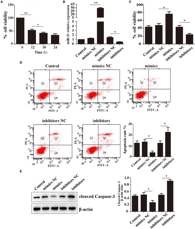 miR-21 enhanced survival of Hemin-induced mesenchymal stem cells (MSCs) (A) . Viability of MSCs treated with Hemin for different lengths of time (B) . Expression level of miR-21 detected by qPCR (C) . Viability of MSCs transfected with miR-21 mimics, miR-21 inhibitors, or their corresponding negative control (NC) (D) . Cell apoptosis analyzed by Annexin V-FITC and PI staining of MSCs in different groups (E) . Western blot analysis of cleaved-caspase-3 expression level in MSCs transfected with different miRNAs. * p